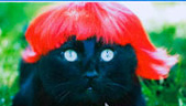 "Hmmm Did ""Kitty Wigs"" Perform a Feasibility Analysis??"